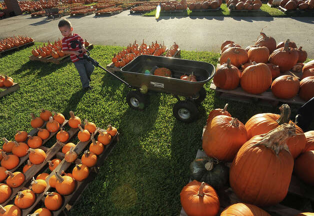 Brenden Gallier, 2, pulls a wagon while collecting pumpkins with his mother at Winfree Baptist Church in Orange on Monday, October 3, 2011. Guiseppe Barranco/The Enterprise Photo: Guiseppe Barranco