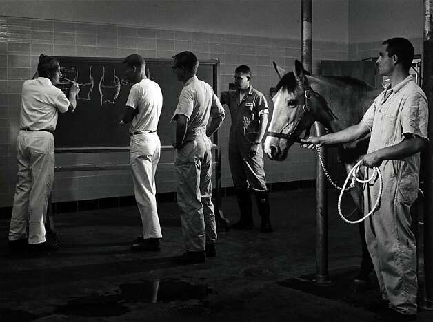 Fiat Lux Dr. Wheat and students in the large animal clinic, UC Davis, 1966. Photo: Ansel Adams, Bancroft Library