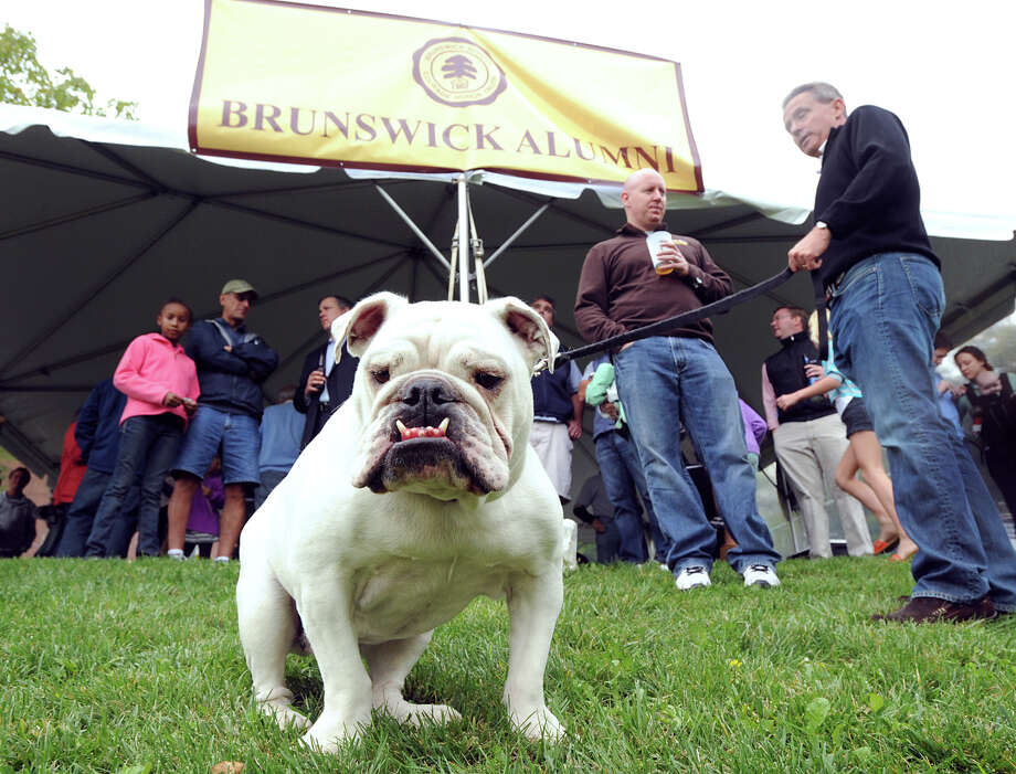 Phil McDonough's Bulldog Bodie during the high school football game between Brunswick School and Avon Old Farms School at Brunswick in Greenwich, Saturday afternoon, Sept. 29, 2012. Photo: Bob Luckey / Greenwich Time