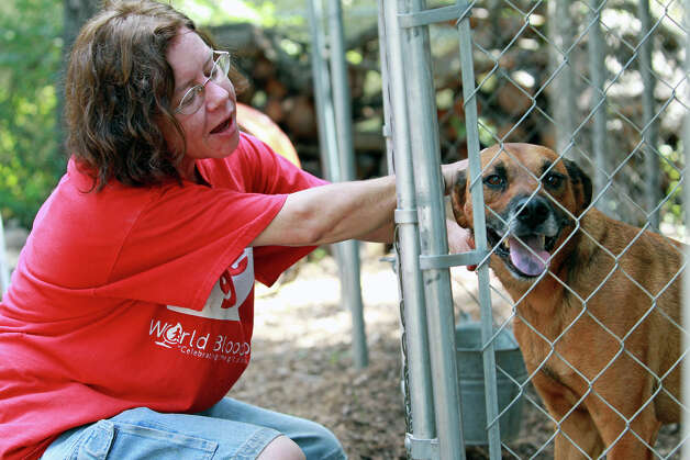 Shelter coordinator Christy Hall comforts Gimpy as Animal Friends Humane Society operates on September 27, 2012. Photo: Tom Reel, San Antonio Express-News / ©2012 San Antono Express-News