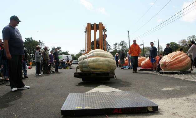 CT Giant Squash and Pumpkin Gower's Association holds their weigh-off at Penfield Beach in Fairfield, Conn. on September 30, 2012. Photo: B.K. Angeletti / Connecticut Post freelance B.K. Angeletti