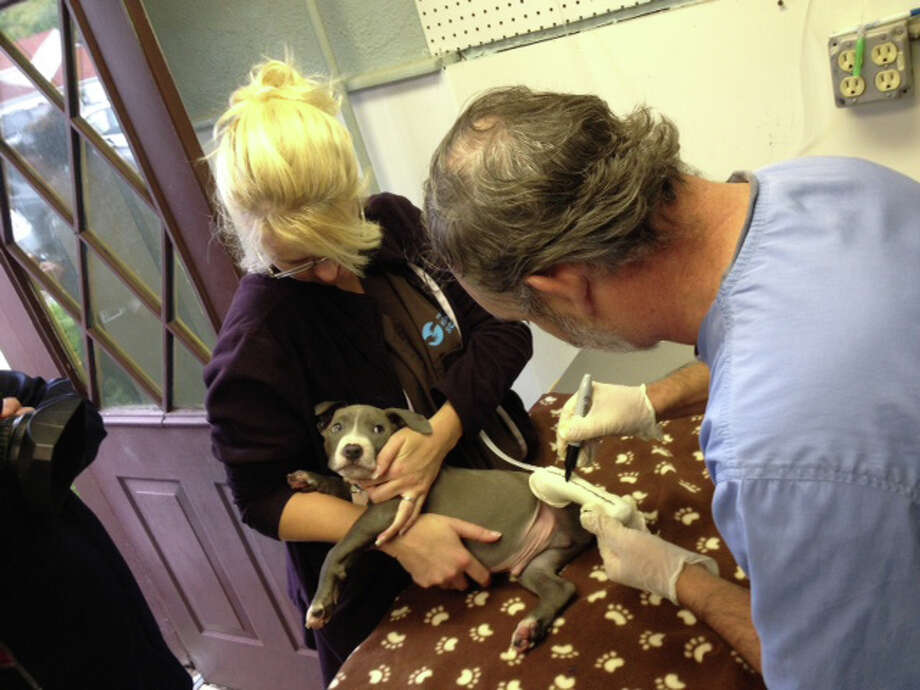 Dr. Tom Bowerstock, right, fits Hudson for a prosthetic paw. Hudson was one of three puppies found Sept. 10 abandoned and emaciated near an Albany rail track. (Photo courtesy of Mohawk Hudson Humane Society)