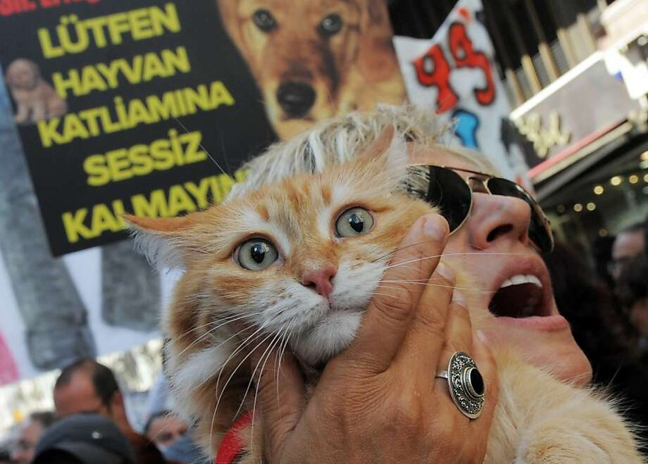 "But I don't want to be a prop for animal rights! A cat is drafted for a march in Istanbul opposing a proposed law that would authorize euthanasia of strays, limit the number of pets kept in houses and allow the government to put to death ""dangerous breeds."" Photo: Bulent Kilic, AFP/Getty Images"