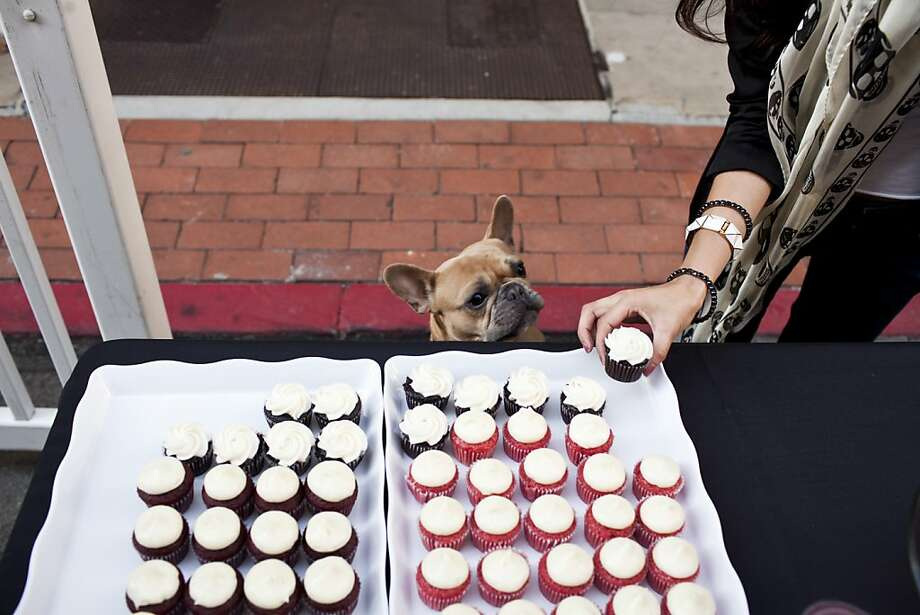 Albie, a Frech Bulldog, looks for a free handout from cupcake vendor Cako Bakery during the first SF Fashion Incubator show on Maiden Lane in San Francisco, Calif., Thursday, September 27, 2012. Photo: Jason Henry, Special To The Chronicle