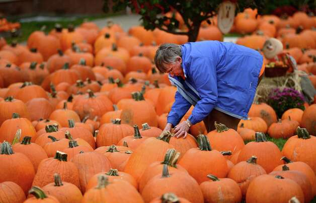 Volunteer sales person Nancy Clark works on the display of pumpkins at the McKownville Methodist Church in Albany, N.Y. October 1, 2012.    Profits from the sale of the pumpkins support the mission scholarships at the church.  Clark is also the music director at the the church.    (Skip Dickstein/Times Union) Photo: Skip Dickstein