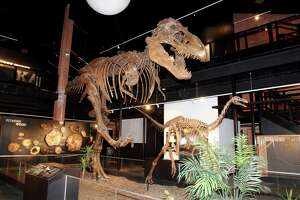 Houston Museum of Natural Science sets reopening date, implements social distancing measures - Photo