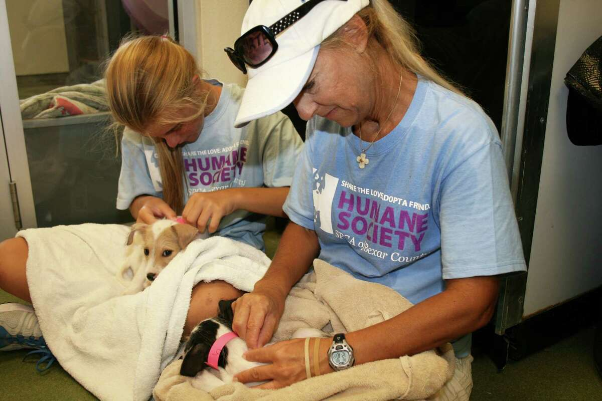 Mom-and-daughter volunteer team Ellery and Melissa Vaughan inspect recent arrivals to the San Antonio Humane Society.