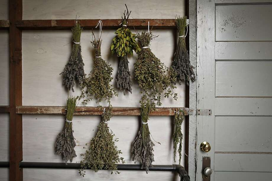 Herbs drying near the Chronicle roof garden are seen on Friday, Sep. 28, 2012 in San Francisco, Calif. Photo: Russell Yip, The Chronicle