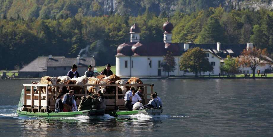 Bavarian mountain farmers pass the chapel of St. Bartholomae on the Lake Koenigssee while returning their cattle from summer pastures near Berchtesgaden, southern Germany, Wednesday, Oct. 3, 2012. The trip by boat is the only way to bring the cattle from their remote summer mountain pastures back to their homestead. (AP Photo/Matthias Schrader) Photo: Matthias Schrader, Associated Press / AP