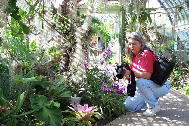 Nederland resident Judy Hunter captures a bit of the beauty of the Orchid Festival on Sunday at Shangri La Botanical Gardens in Orange. The festival continues with a lecture on Frances Ann Lutcher tonight at Lutcher Theater. Photo: Sarah Moore