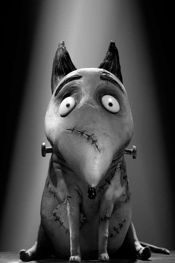 "Sparky of Disney's animation ""Frankenweenie"" is Victor Frankenstein's dog. (Simon Jacobs/Courtesy Disney Enterprises, Inc./MCT) Photo: HANDOUT / MCT"