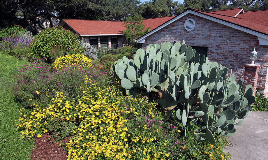 Xeriscape. Plant drought-tolerant shrubs and perennials and give them the proper amount of sunlight. Photo: JOHN DAVENPORT, San Antonio Express-News / ©San Antonio Express-News/Photo Can Be Sold to the Public