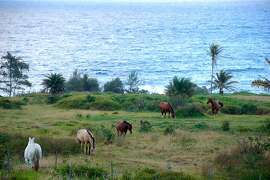 Horses play on an oceanfront stretch of Hana Ranch, founded by a former San Francisco entrepreneur in 1944.