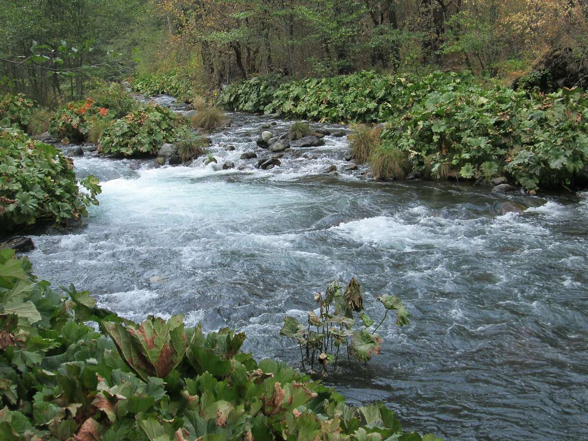 The McCloud River speaks to those who love wild fish and it also escaped the wildfire. Photo by Tom Stienstra/The Chronicle