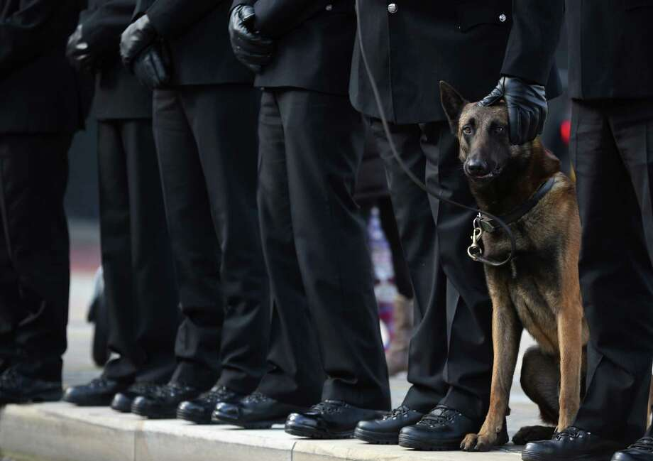 Police dog Vinny stands by his handler as police officers line the route for the funeral cortege of police Constable Nicola Hughes at Manchester Cathedral on October 3, 2012 in Manchester, England. Photo: Christopher Furlong, Getty Images / 2012 Getty Images