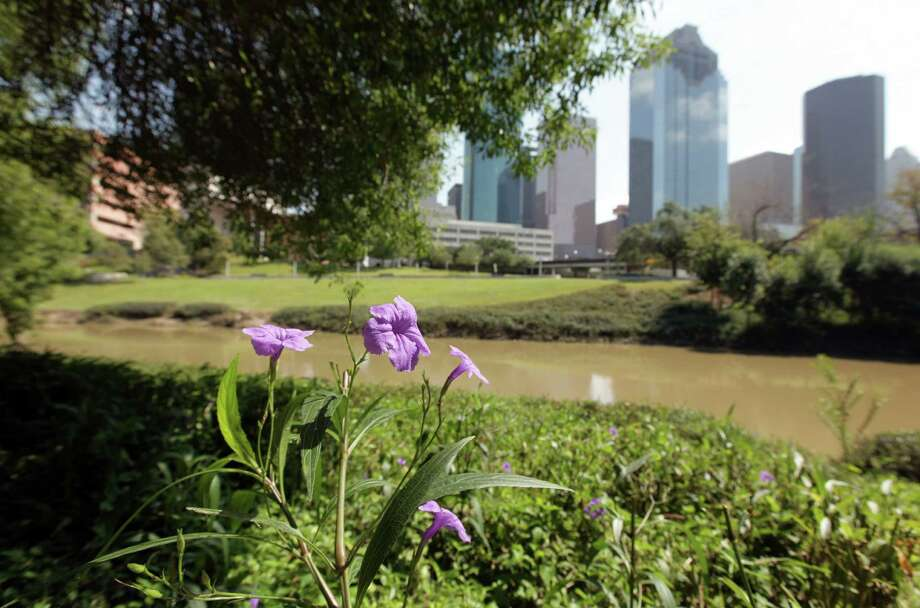 Flowers and Native Texas plants can be viewed along the Sabine-To-Bagby Promenade on the Buffalo Bayou on Wednesday, Oct. 3, 2012, in Houston. Photo: Mayra Beltran, Houston Chronicle / © 2012 Houston Chronicle