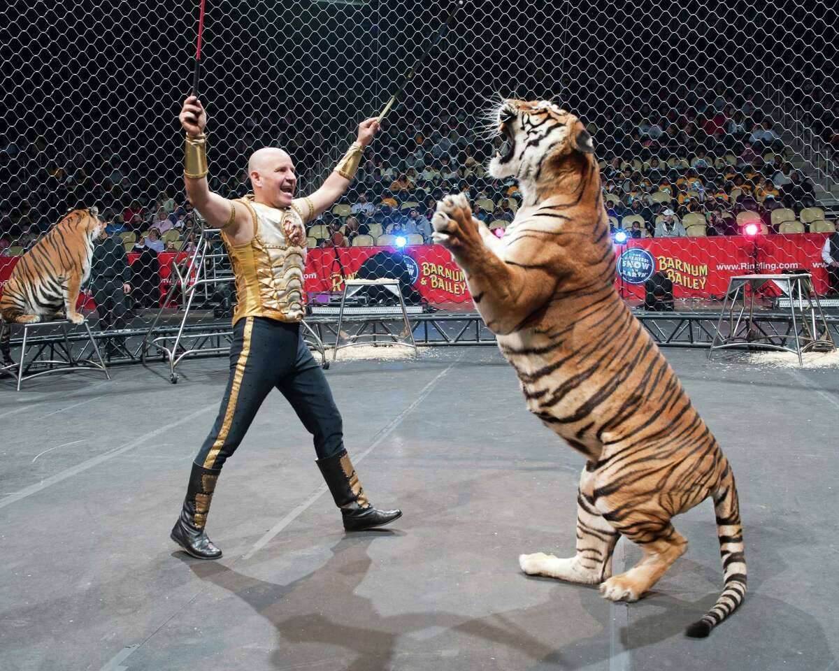 The Ringling Bros. and Barnum & Bailey Greatest Show on Earth comes to Bridgeport Oct. 18-21. Above is animal trainer Tabayara.