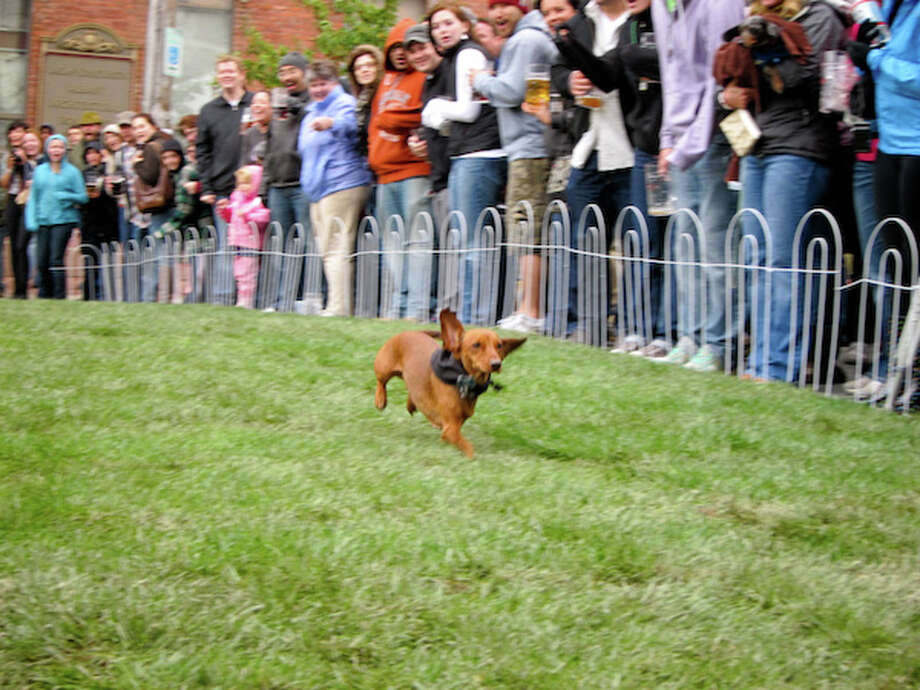 "PETE CORCORAN/FRIDAY PUPPY A ""wiener dog"" race will again be a feature of Wolff's Biergarten's annual Oktoberfest, scheduled for Saturday on broadway in Albany's warehouse district."