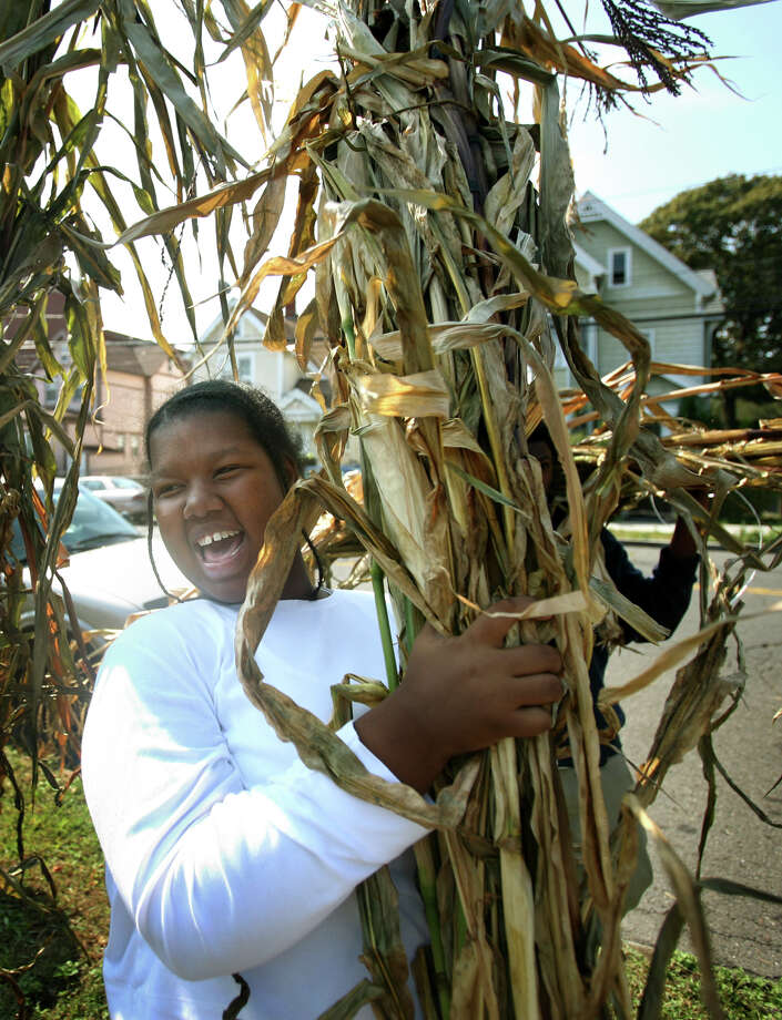 Mia Ancrum, a junior special education student at Bassick High School in Bridgeport, carries a budle of corn stalks to decorate the farm stand in front of the school, a collaboration between the school and Bridgeport Urban Gardens community gardens, on Thursday, September 27, 2012. Photo: Brian A. Pounds / Connecticut Post