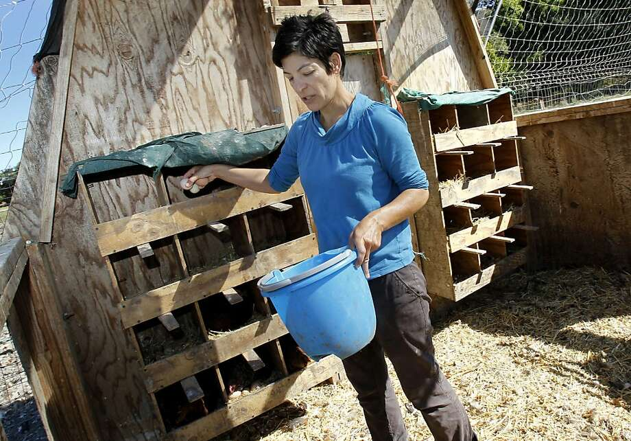 Alexis Koefoed gathers eggs at Soul Food Farm in Vacaville, which recently closed its pasture-raised chicken and egg business despite praise from local chefs. Photo: Brant Ward, The Chronicle