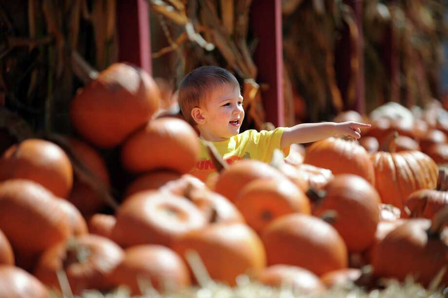 Two-year-old Serafinn Pincince, of Bridgeport, spots his perfect pumpkin Wednesday, Sept. 19, 2012 at Silverman's Farm in Easton, Conn. Photo: Autumn Driscoll / Connecticut Post