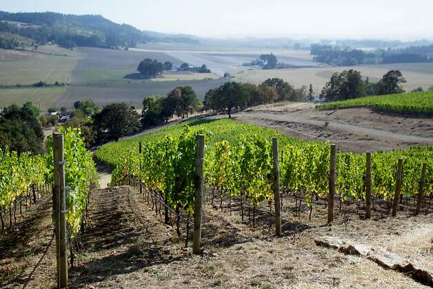 Antica Terra Winery, Dundee, Oregon -- Winemakers are in full harvest and production mode in Western Oregon as the current crop of grapes are the best in the past  few growing seasons. Photo: Bruce Ely