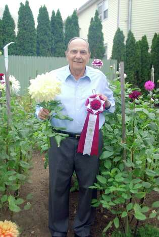 Cos Cob resident Tony Marzullo took the top honor at the recent Greenwich Dahlia Society show, Dazzling Dahlias, with his yellow dinner-plate-sized dahlia, Kelvin Floodlight. Photo: Contributed Photo / Greenwich Citizen