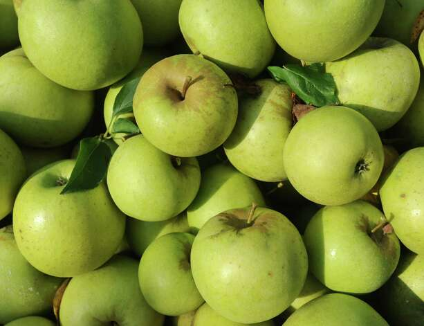 Fresh yellow-delicious apples set in a large wooden crate Wednesday, Sept. 5, 2012, at Reid's Orchard in Owensboro, Ky. The crate of apples will be taken to the barn, sorted and graded.  (AP Photo/The Messenger-Inquirer, John Dunham) Photo: John Dunham, MBO / The Messenger-Inquirer