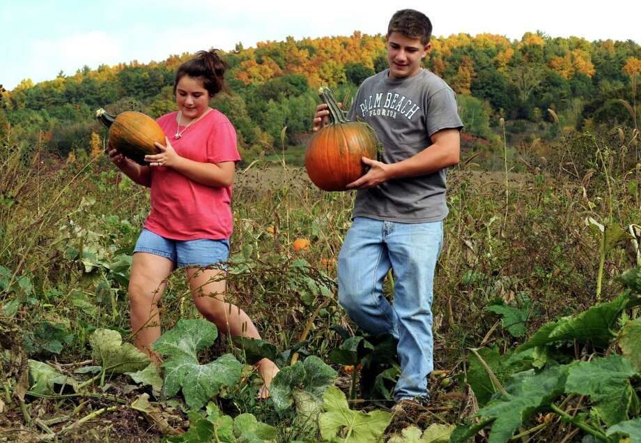 Twelve-year-old Casey Lizza, left, and her 16-year-old brother Peter Lizza pick pumpkins at Pumpkin Pete's on Route 30 in Schoharie, NY Friday Oct. 5, 2012. (Michael P. Farrell/Times Union) Photo: Michael P. Farrell