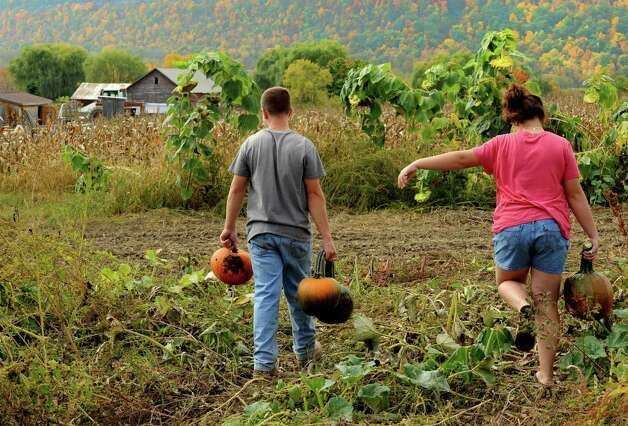 Peter Lizza, age 16, left, and his sister, Casey Lizza, 12, right, pick pumpkins at Pumpkin Pete's on Route 30 in Schoharie, NY Friday Oct. 5, 2012. (Michael P. Farrell/Times Union) Photo: Michael P. Farrell