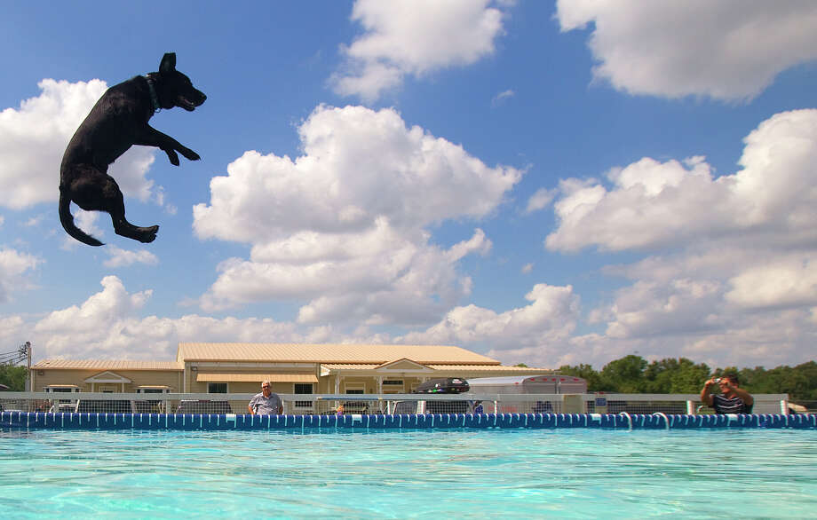 Blaine soars through the air during the Outdoor Big Air discipline at the DockDogs national competition Saturday, Oct. 6, 2012, in Houston. The event featured Outdoor Big Air, Extreme Vertical and Speed Retrieve. Photo: Cody Duty, Houston Chronicle / © 2012 Houston Chronicle