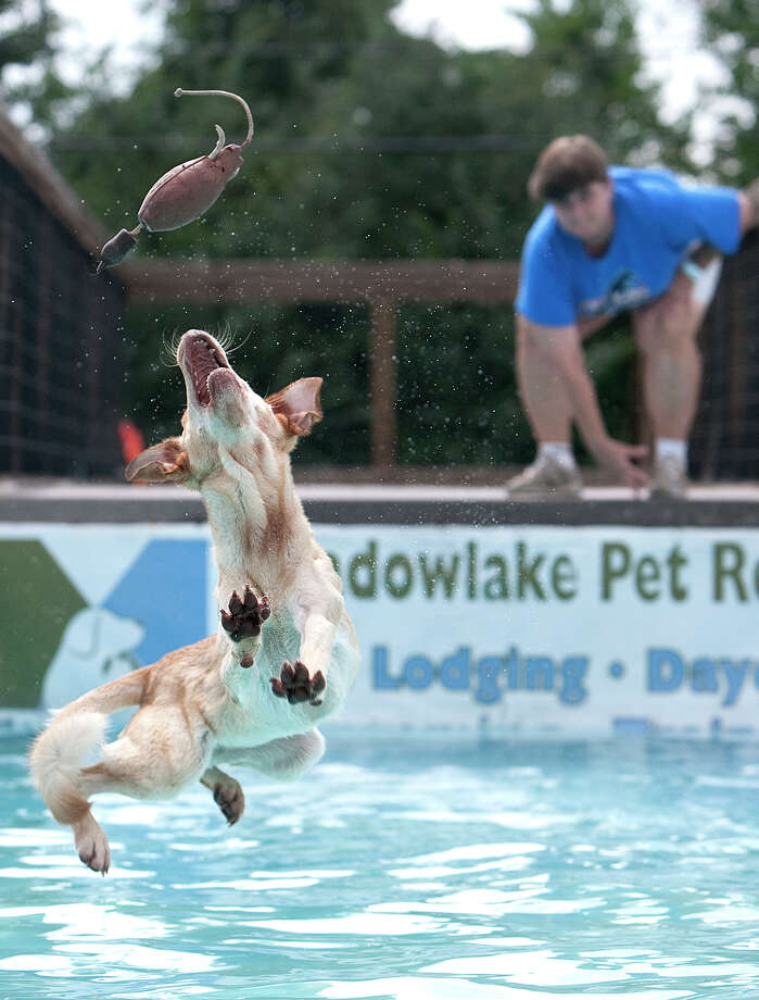 Sandy Goodson watches as her dog Lil Texas reaches for a toy during practice for the Outdoor Big Air discipline at the DockDogs national competition Saturday, Oct. 6, 2012, in Houston. Photo: Cody Duty, Houston Chronicle / © 2012 Houston Chronicle