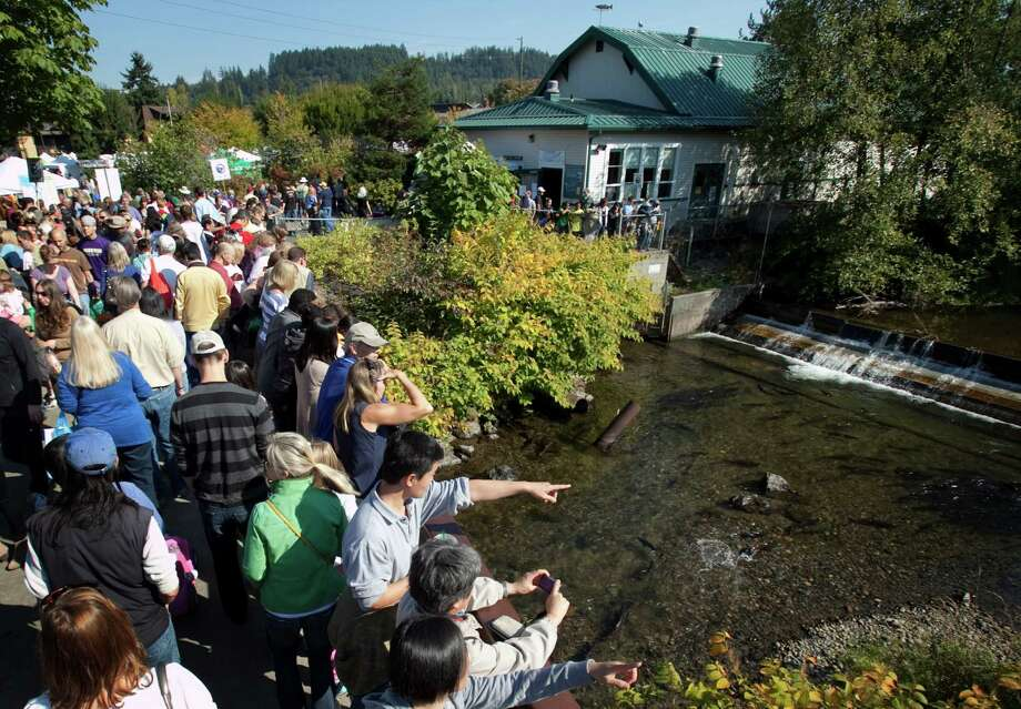 People watch the salmon return during Issaquah Salmon Days on Saturday, October 6, 2012. The annual festival kicks off with a parade and celebrates the return of the salmon to Issaquah Creek. Photo: JOSHUA TRUJILLO / SEATTLEPI.COM