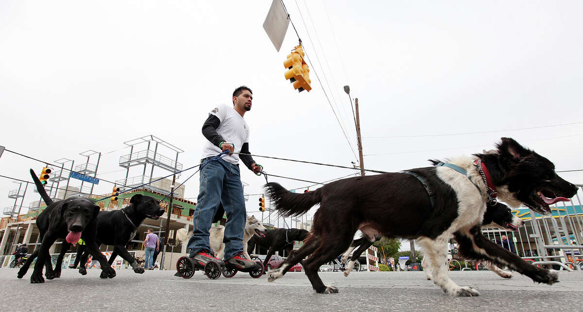 Andres Valdez (center) is pulled by his dogs through the intersection of Broadway Street and E. Josephine Street on Sunday Oct. 7, 2012 during Siclovia.