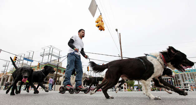 Andres Valdez (center) is pulled by his dogs through the intersection of Broadway Street and E. Josephine Street on Sunday Oct. 7, 2012 during Siclovia. Photo: Edward A. Ornelas, San Antonio Express-News / © 2012 San Antonio Express-News