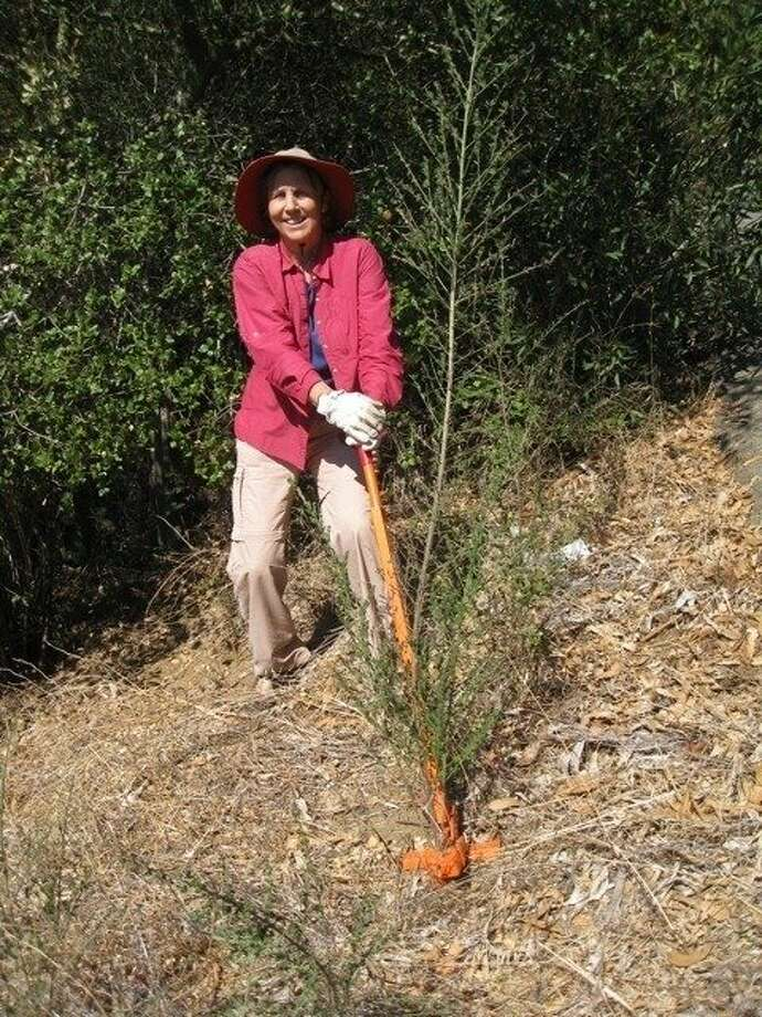 Sue Duckles pulls weeds at Butters Canyon in Oakland. Photo: Courtesy Of Sherwood Donahue.