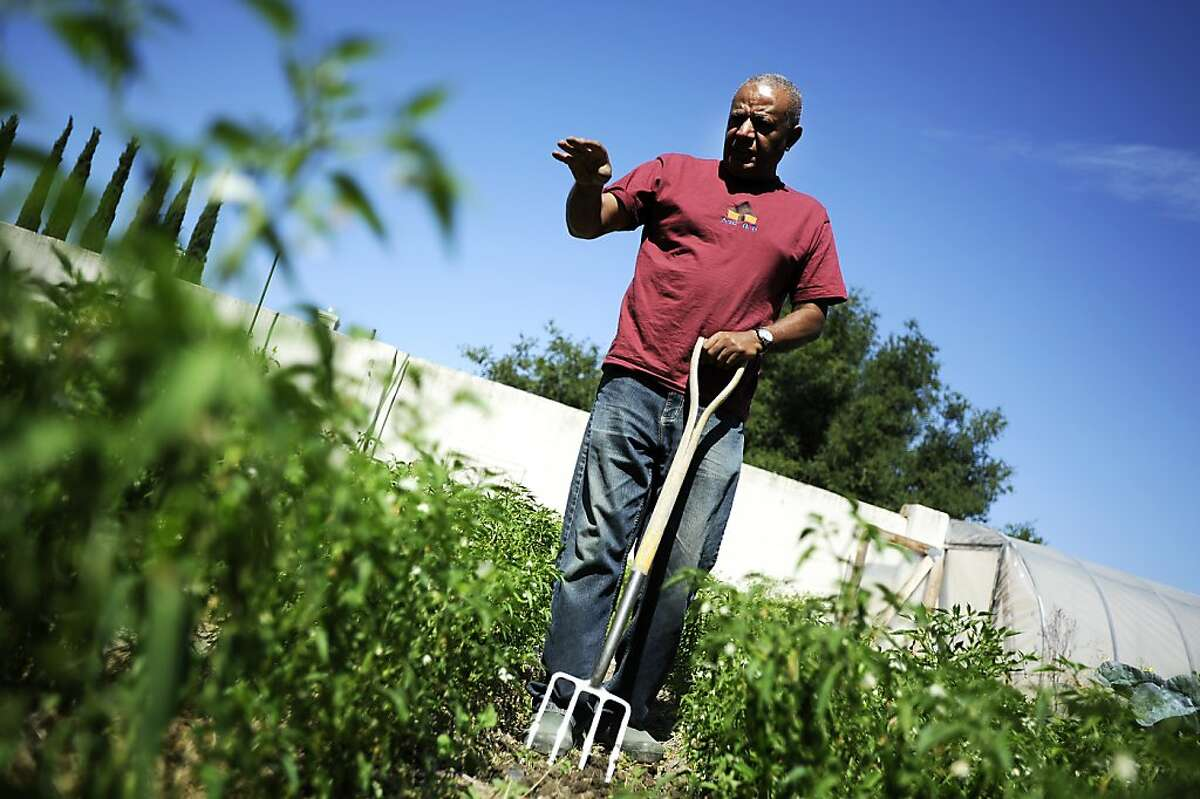 Menkir Tamrat talks about his Berbere and Mitmita peppers growing in his backyard garden. Tamrat has made it his mission preserve Ethiopian culinary heritage by bringing that his country's heirloom crops to America. Fremont, CA Friday September 14th, 2012.