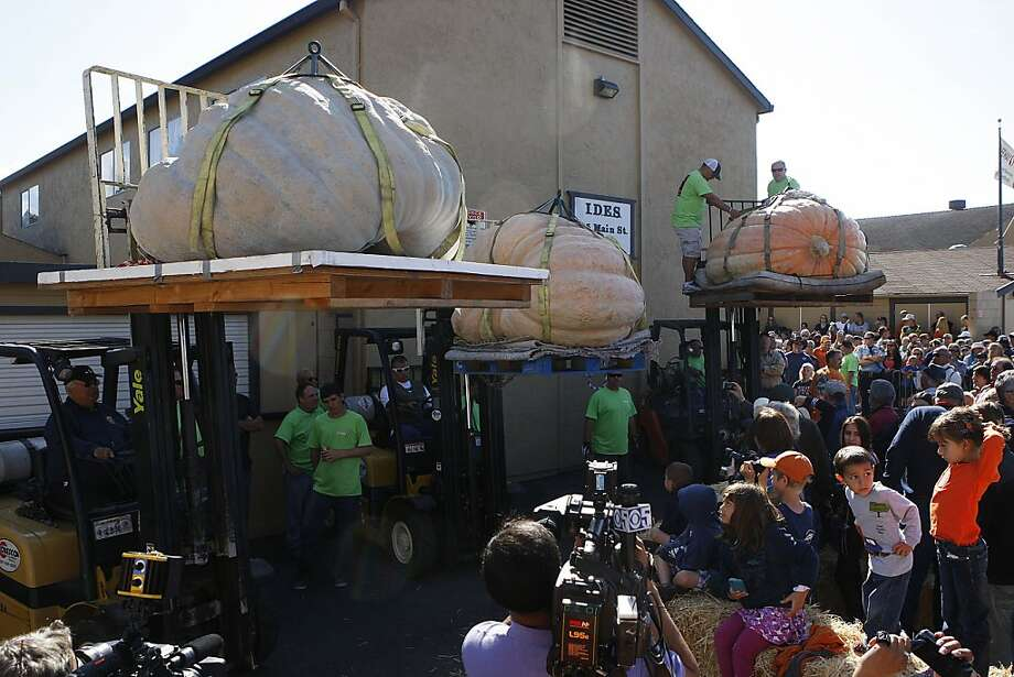 The three biggest pumpkins  in Half Moon Bay, Calif., during the 39th Annual Safeway World Championship Pumpkin Weigh-Off on Monday, October 8, 2012. Photo: Liz Hafalia, The Chronicle