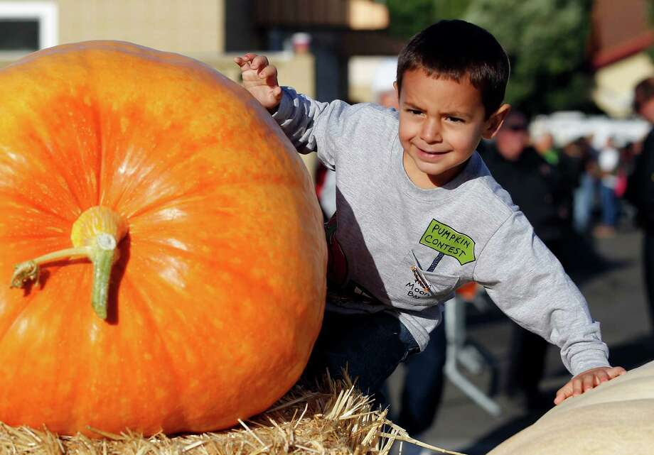 Lorenzo Bianchi, 4, climbs on some of his grandfathers pumpkins at the Half Moon Bay Pumpkin Festival Weigh-off contest in Half Moon Bay, Calif., Monday, Oct. 8, 2012. Thad Starr from Pleasant Hill, Ore., won with a contest record of 1,775 pounds, making it a new California record. Starr wins six dollars for each pound, which equals $10,650. (AP Photo/Tony Avelar) Photo: Tony Avelar, Associated Press / FR155217 AP