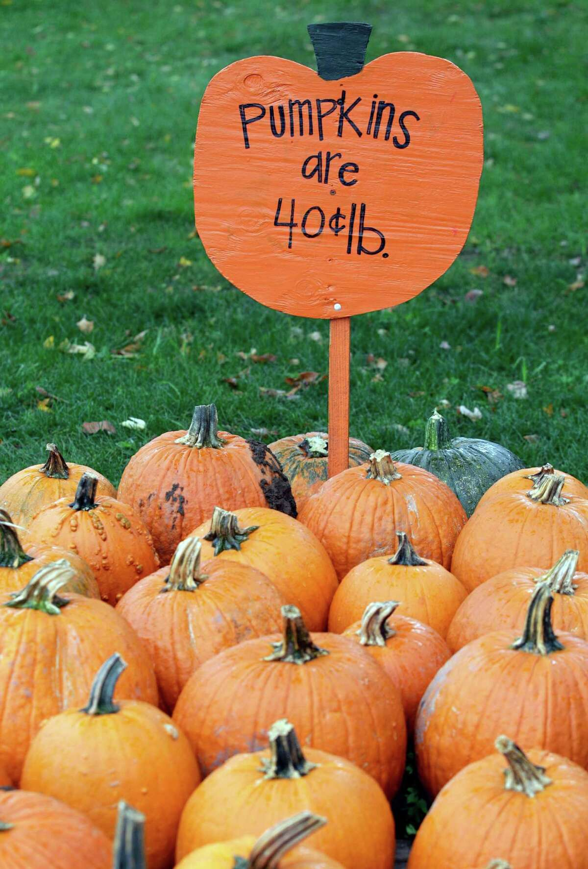 Halloween pumpkins are for sale at Kelkenberg Farm in Akron, N.Y., Monday, Oct. 8, 2012. While many crops withered after a late spring frost and a dry summer, farmers say their pumpkins have thrived in the drier weather this year.