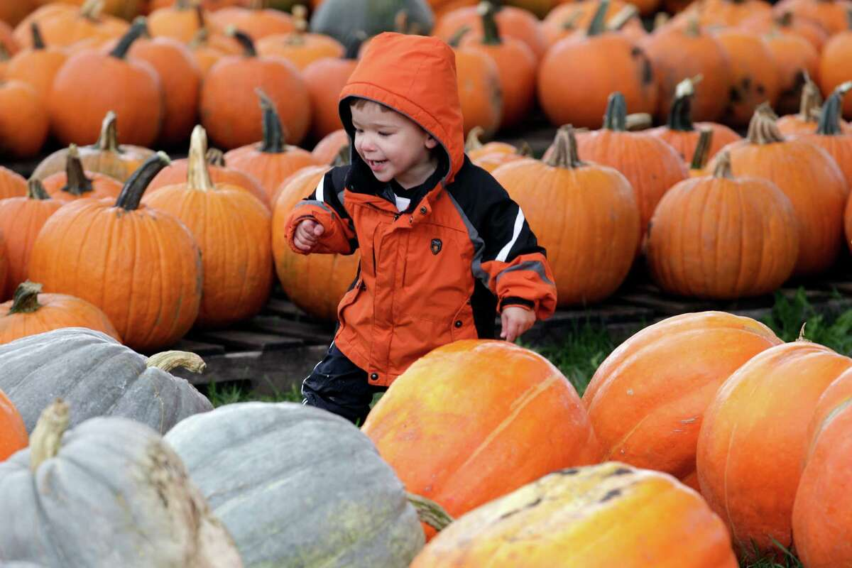 Mitchell Hillman, 2, picks out a pumpkin for Halloween at Kelkenberg Farm in Akron, N.Y., Monday, Oct. 8, 2012.