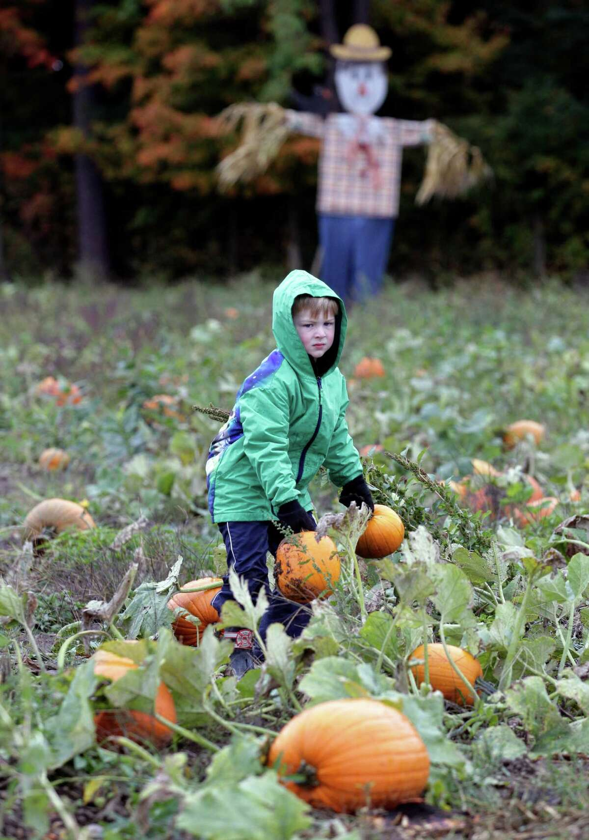 Kiernan Lembke picks out two pumpkins for Halloween at Kelkenberg Farm in Akron, N.Y., Monday, Oct. 8, 2012. While many crops withered after a late spring frost and a dry summer, farmers say their pumpkins have thrived in the drier weather this year.
