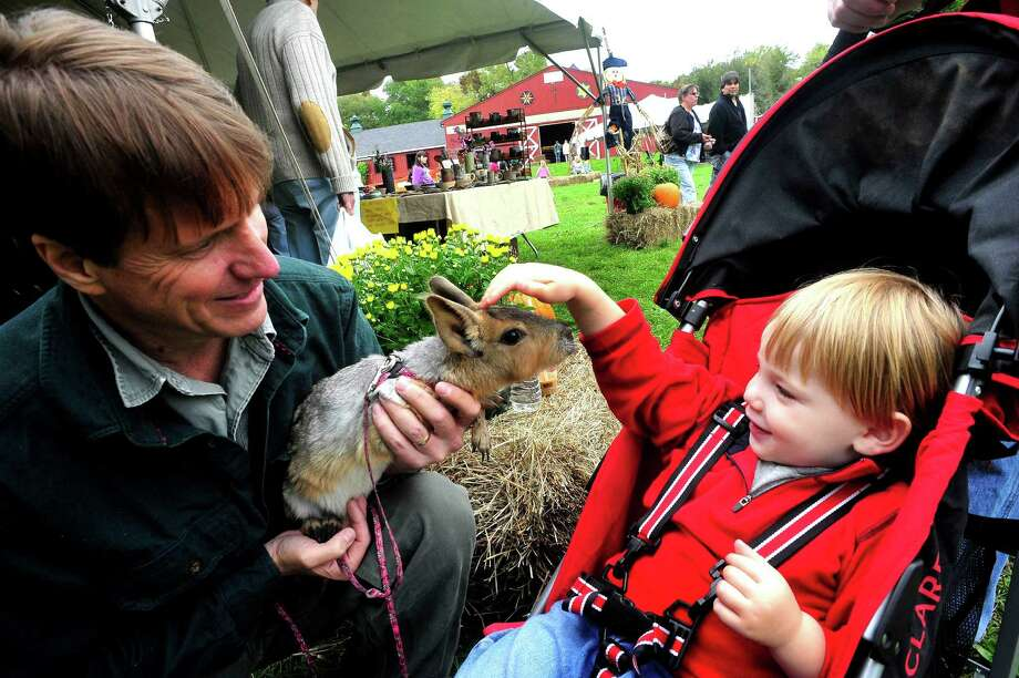 Peter Durkin holds a Patagonian Cavy to the delight of Charlie Bocompani, 2, during Green Chimneys Harvest Festival Saturday, Sept. 29, 2012 in Brewster, N.Y. Photo: Michael Duffy / The News-Times