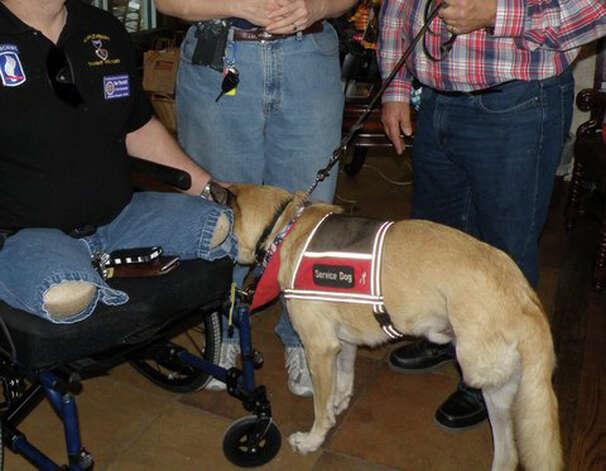 Colonel, a German Shepherd mix that lost a leg after being hit by a car, is now a therapy dog that provides comfort to wounded troops. Colonel will be inducted into the Texas Animal Hall of Fame in December. COURTESY