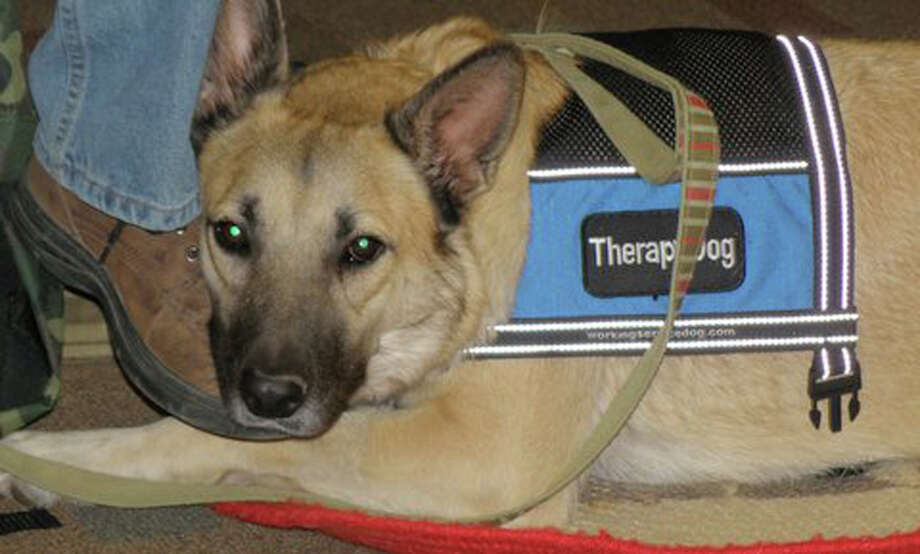 Colonel, a German shepherd mix that lost a leg after being hit by a car, is now a therapy dog for wounded troops. Photo: Courtesy Photo, Special To The Express-News