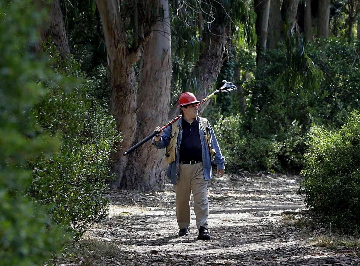 UC Berkeley research associate Doug Schmidt walks through Golden Gate Park, where sudden oak death has been found.