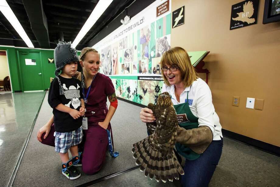 Sharon Schmalz, right, holds an injured Coopers Hawk brought in by Patty Allison, center, and Seth Petrey, 4, at the Wildlife Center of Texas, Tuesday, Oct. 2, 2012, in Houston. Photo: Michael Paulsen, Houston Chronicle / © 2012 Houston Chronicle