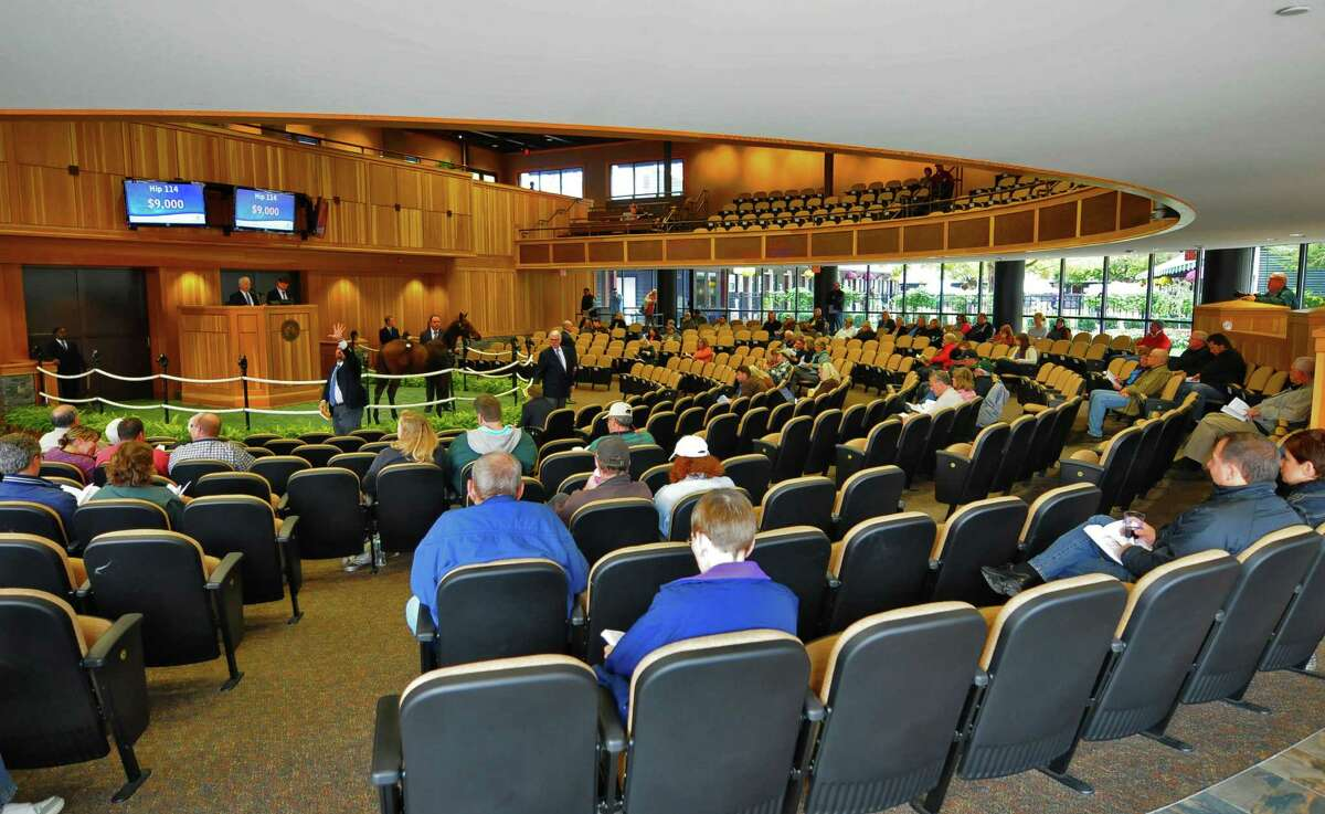 A colt that was foaled in New York is auctioned during the Fasig-Tipton Saratoga Fall Mixed & Horsing of Racing Ages sale, on Tuesday Oct. 9, 2012 in Saratoga Springs, NY. (Philip Kamrass / Times Union)