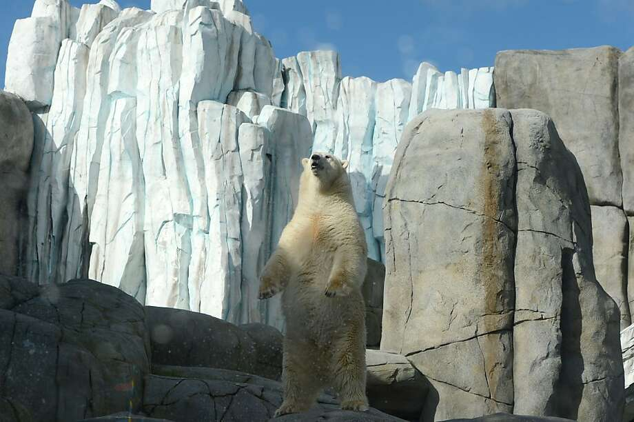 Another day in the Fortress of Solitude: A polar bear stands as if surveying his kingdom at Hagenbeck Zoo in Hamburg. Photo: Marcus Brandt, AFP/Getty Images