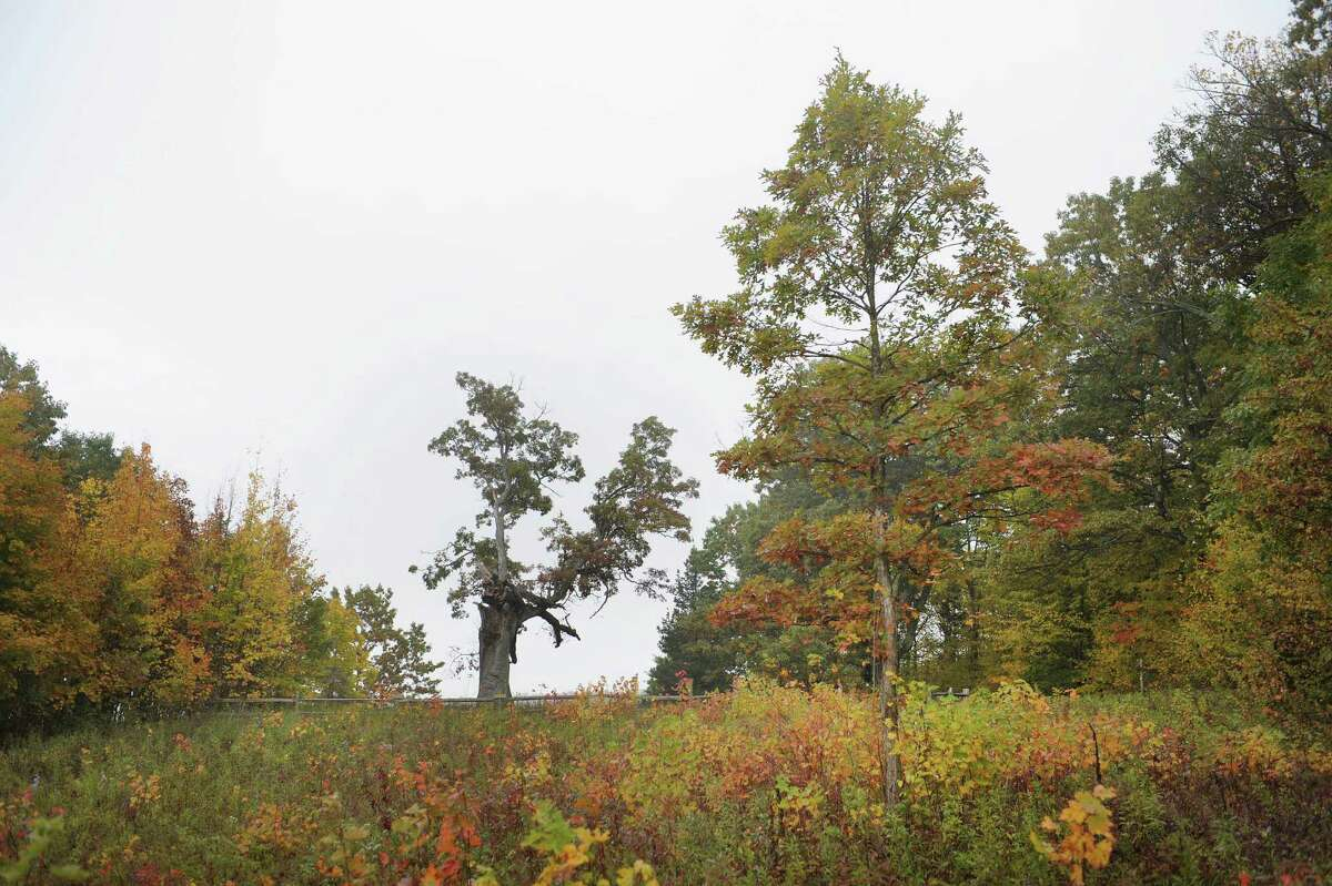 Landis Arboretum 174 Lape Road, Esperance (Paul Buckowski / Times Union)